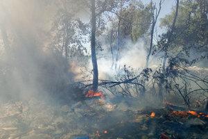 Пожар на Русановских садах в Киеве ликвидировали - ГСЧС