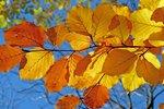Сегодня – 25 сентября. Фото: pixabay