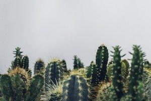 Житель Бердянска высадил в огороде 198 кактусов