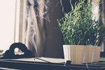 Кімнатні рослини і пахощі вам на допомогу. Фото: pixabay