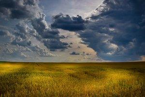 Земельная реформа: ошибки, проблемы и пути их решений
