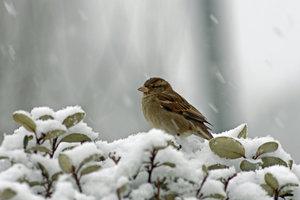 В Румынии выпало 6 сантиметров снега