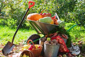 Осенние овощи: польза для здоровья и рецепты вкусных блюд