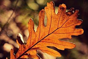 2 октября: какой сегодня праздник, приметы и суеверия этого дня