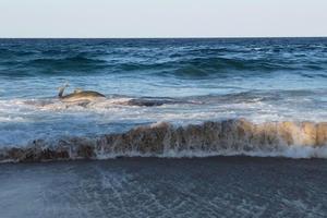 Акула неожиданно выбросилась на пляж: невероятные фото и видео