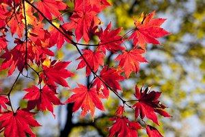10 октября: какой сегодня праздник, приметы и суеверия этого дня