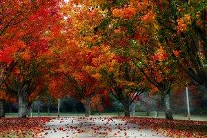 11 октября: какой праздник, приметы, суеверия, что нельзя делать