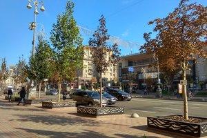 Каштаны на Крещатике заменят платанами: сколько посадят деревьев и потратят денег