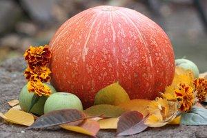 Тыква: польза и вред главного овоща осени