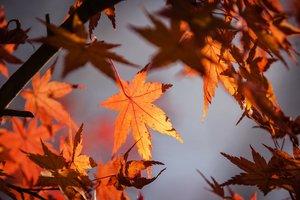 12 октября: какой праздник, приметы, суеверия, что нельзя делать