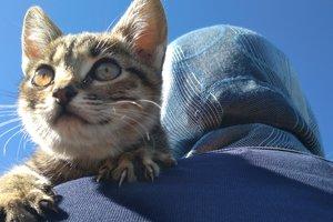 Церковный приют: под Киевом монахи взялись опекать десятки бездомных котов