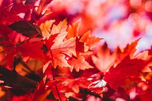 13 октября: какой праздник, приметы, суеверия, что нельзя делать