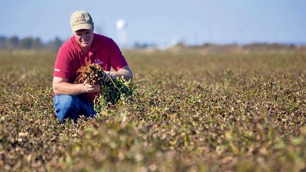 На Херсонщине фермеры начинают выращивать нестандартные культуры