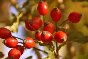 15 октября: какой праздник, приметы, суеверия, что нельзя делать
