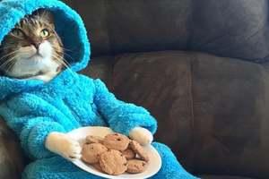 """Посольство США  пригласило всех на """"вечеринку с котами и пижамами"""""""