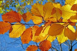 16 октября: какой праздник, приметы, суеверия, что нельзя делать