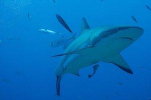 Голый мужчина прыгнул в аквариум к безжалостным акулам: видео инцидента