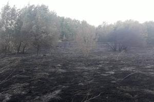 В Запорожской области задержали поджигателя леса