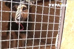 На Закарпатье женщина продала квартиру ради приюта для собак