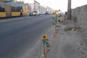 Дороги в Киеве: на Шулявском мосту уже созрели подсолнухи