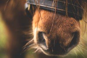В Техасе спасли пони, который застрял в канализации