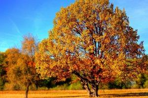 20 октября: какой праздник, суеверия, приметы, что нельзя делать