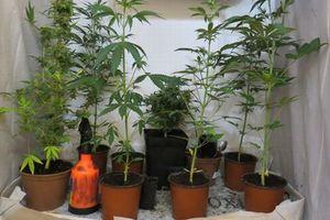 В Испанском парламенте задумались о легализации марихуаны
