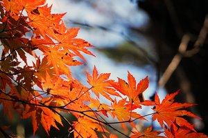 22 октября: какой праздник, суеверия, приметы, что нельзя делать