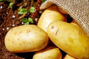 Что мешает Украине заработать на картошке: эксперты назвали главные проблемы