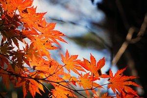 24 октября: полнолуние, суеверия, приметы, что нельзя делать