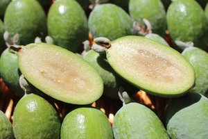 Фейхоа: польза и вред самого экзотического фрукта осени