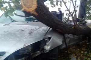 В Мариуполе легковушка врезалась в дерево: погиб водитель