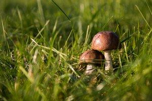 В Запорожской области пять человек отравились грибами