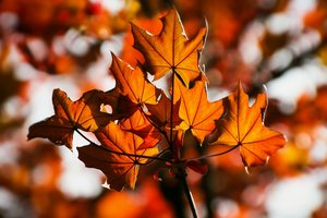 25 октября: какой праздник, суеверия, приметы, что нельзя делать