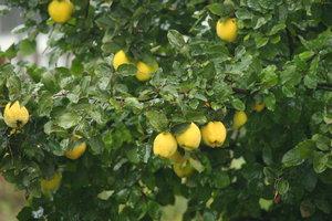 Украинские яблоки гниют в садах, а магазины торгуют дорогими импортными фруктами