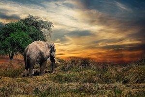 В Индии от поражения током погибли семь слонов