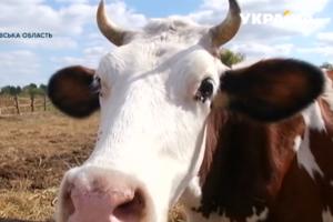 В Днепропетровской области супруги создали семейную ферму