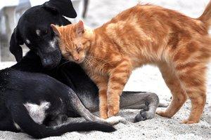 Коты vs собаки: кого больше любят украинцы