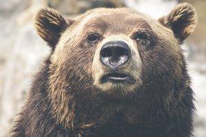 В России медведь растерзал 15-летнего подростка