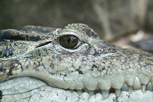 Недоверчивые посетители зоопарка закидали камнями крокодила в Китае