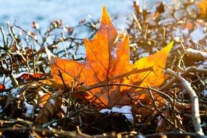 Дмитриев день 8 ноября: приметы, суеверия, что нельзя делать