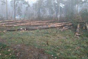 На Лесном в Киеве неизвестные самовольно вырубают лес