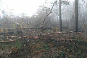 Вырубка леса в Киеве: полиция открыла уголовное производство