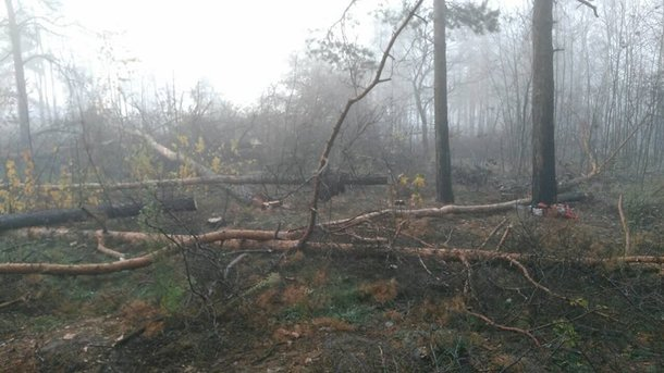 Deforestation in Kiev: The police are waiting for the damage from forestry