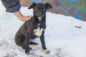 Как помочь бездомным животным пережить зиму