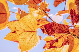 9 ноября: какой сегодня праздник, приметы, суеверия, что нельзя делать