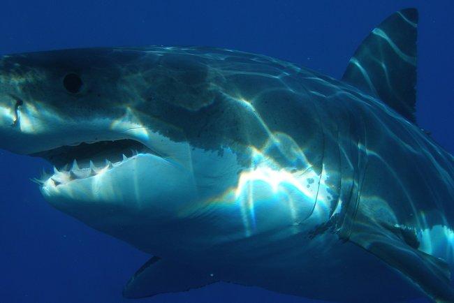 Вор чуть не попался в пасть акуле. Фото: pixabay