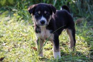 Военный спас щенку жизнь и в самый сложный момент пес отдал свой долг