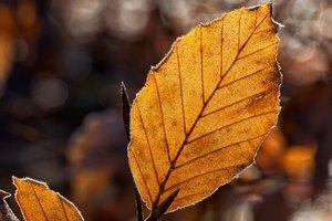 10 ноября: день Параскевы, приметы, суеверия, что нельзя делать
