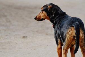 Китайский Хатико пленяет сердца: верный пес ждет умершую хозяйку